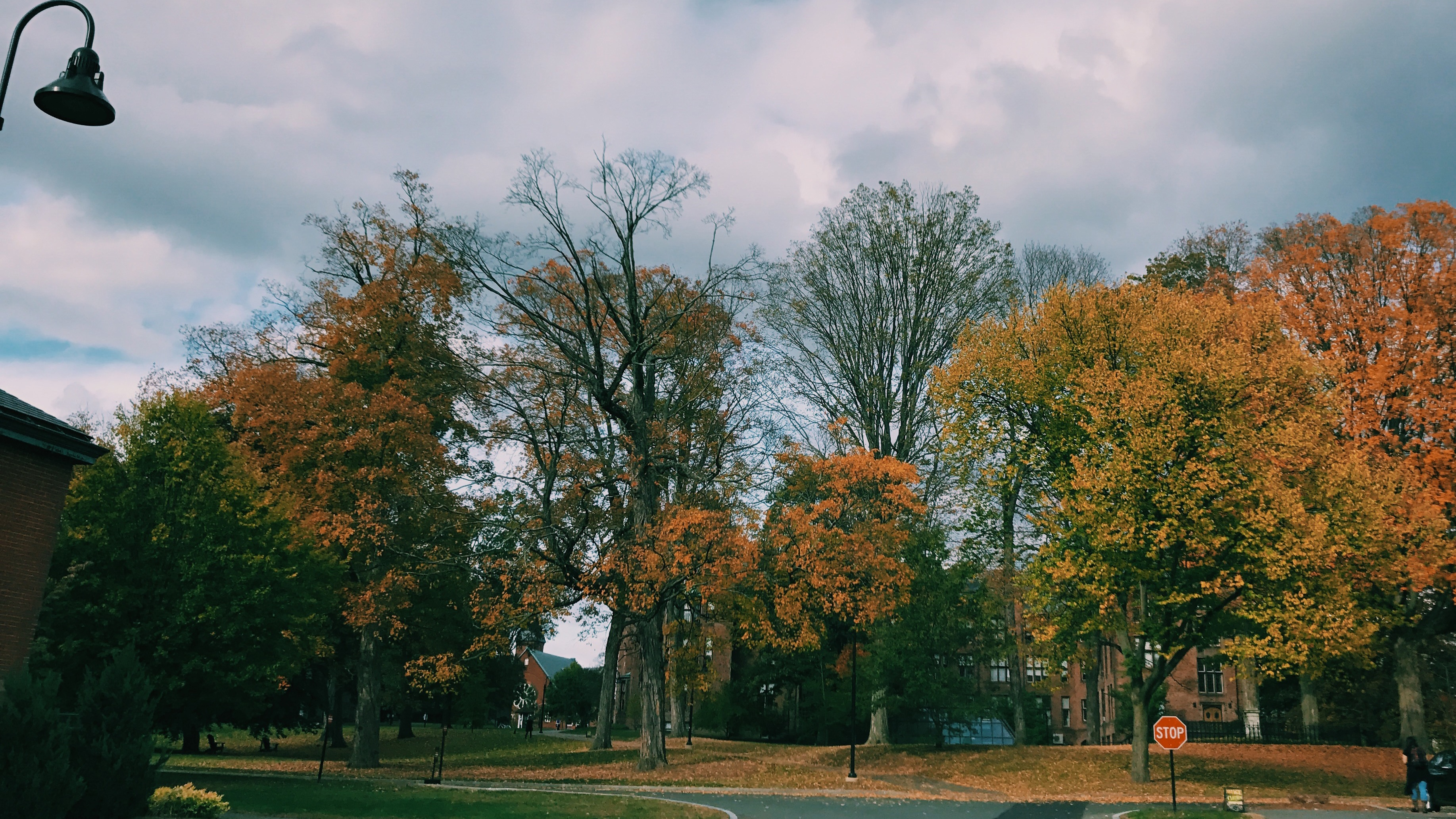 Campus in fall, courtesy of Hunar Anand '21