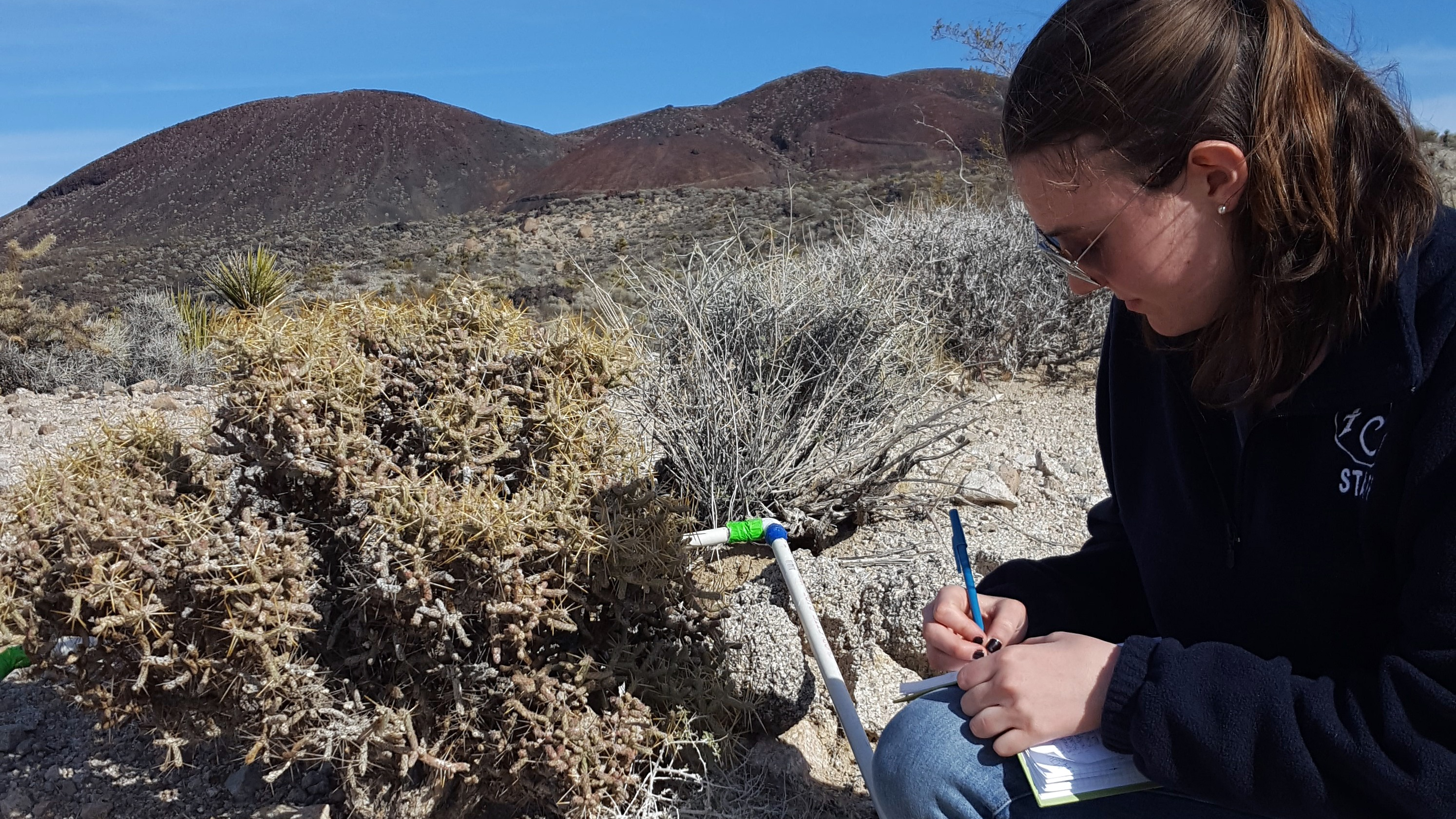 Blog_Braverman5.jpg Documenting an observation of a pencil cholla cactus