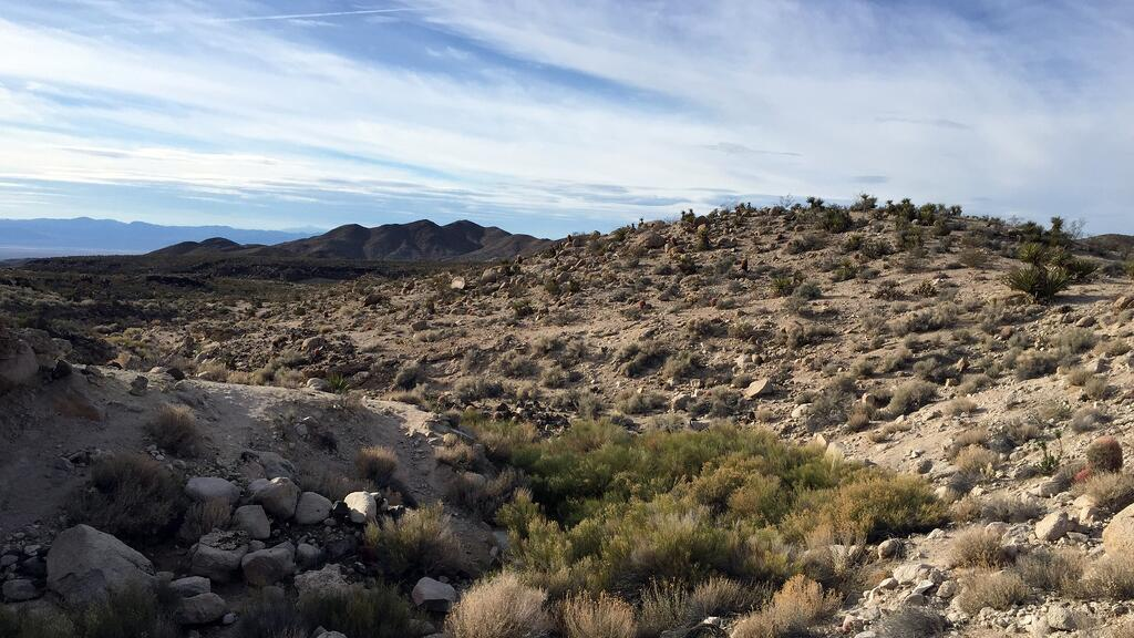 The Mojave National Preserve in California