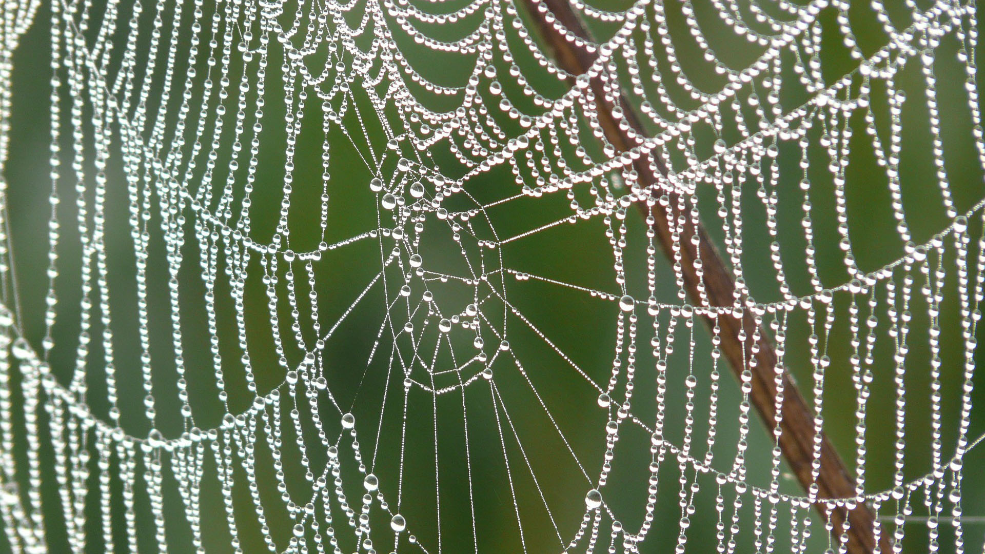 Detail of dew drops on a cobweb