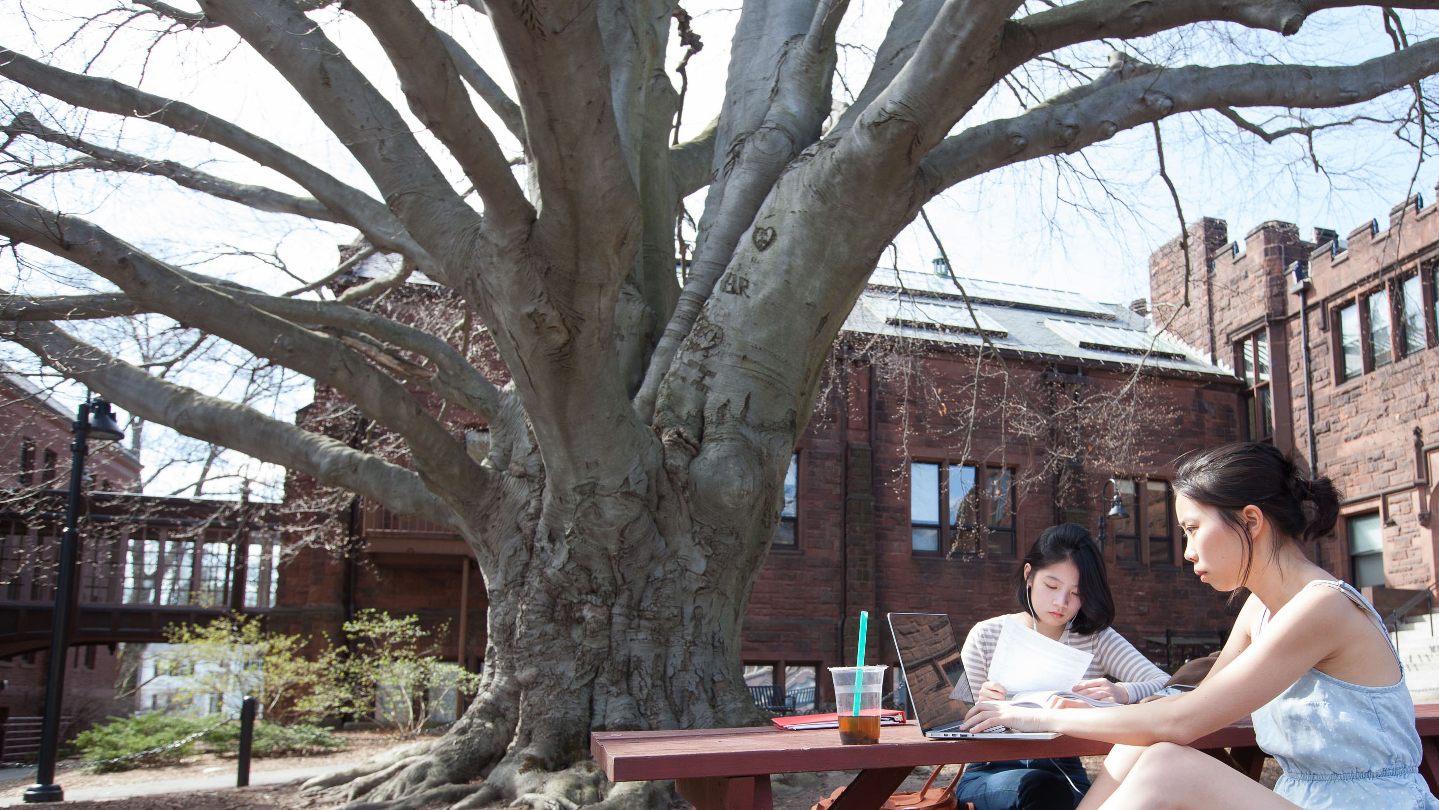 Students at work by Dwight Hall and the copper beech tree