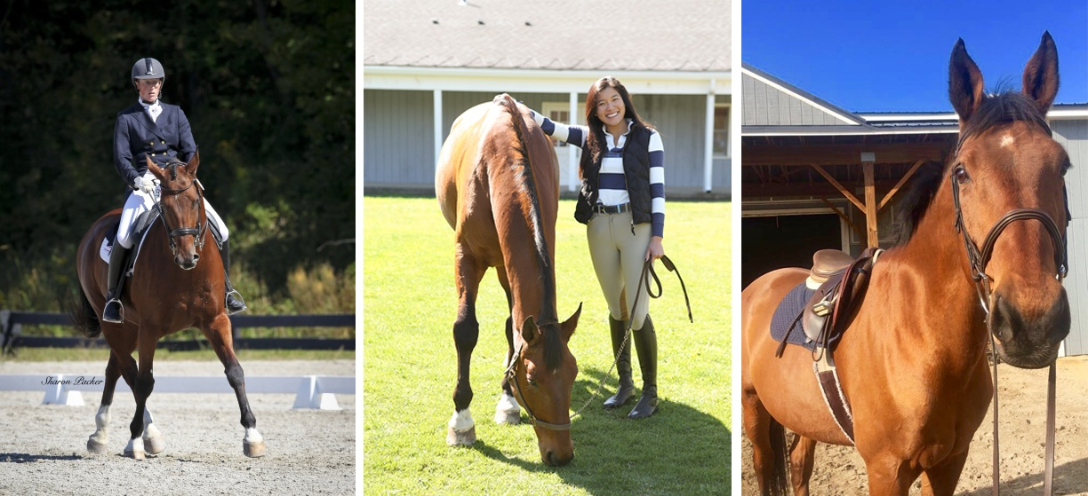 From left, Ronaldo competing in dressage with his former owner; with Mika McKinney on campus; and perking his ears for a photo
